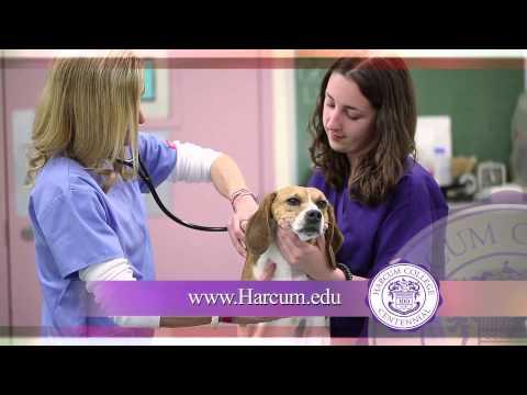 2014 Harcum College 30 Second Promo Video