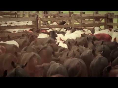 Confiança GAP - Episódio 2 | Fazendas Reunidas