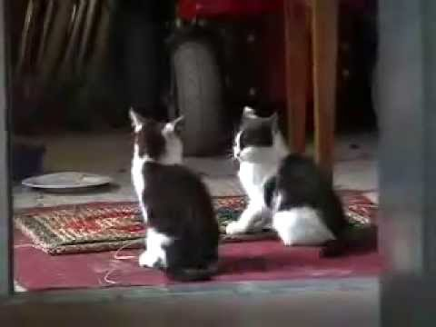 comedy: funny cute kittens having fun playing Video