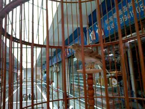 MrBufares - سوق الطيور في الصين الجزء الثالث
