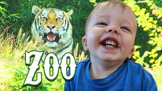 Zoo Trip | Cute Funny Crazy Animals | Wild Animal Adventure for Kids with Kinder Playtime