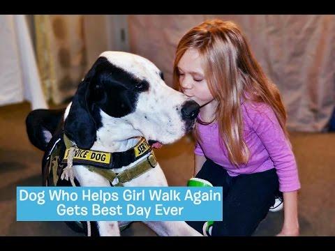 George, el perro que ayuda a una niña a caminar