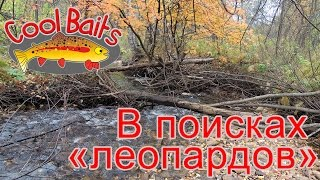 "CoolBaits - В поисках ""леопардов"" \ On the way to the trout"