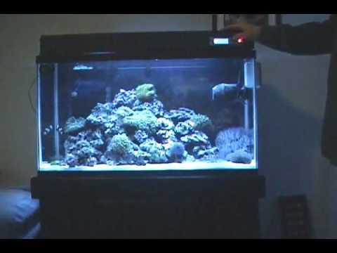 Part 2 my 29 gallon marine salt water aquarium coral reef for 20 gallon saltwater fish tank