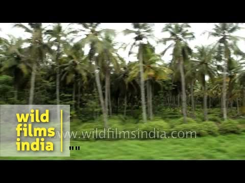 Passing coconut trees: Train journey to Kerala