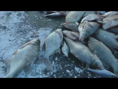дальний маныч рыбалка