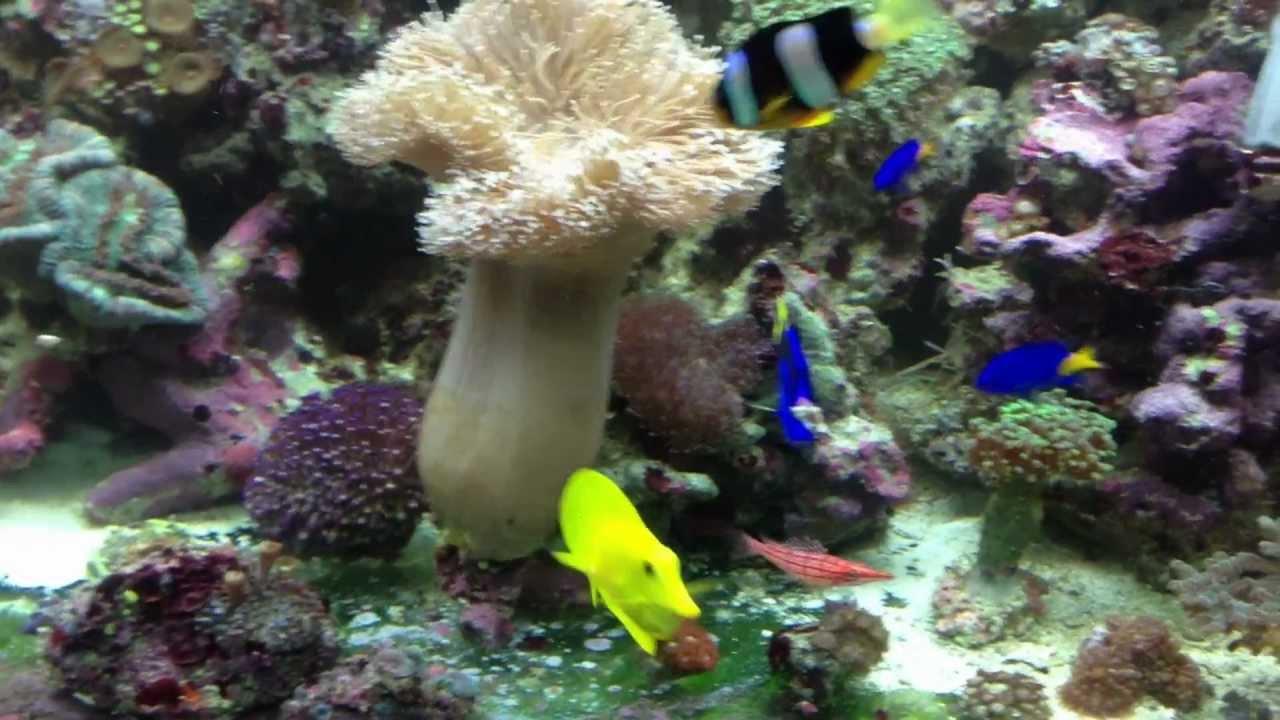 Aquarium eau de mer 75l for Aquarium eau de mer
