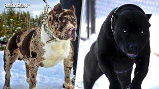 5 Razas de perro que parecen creados por Satanás