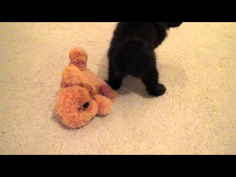 Kitty Eats Bear!