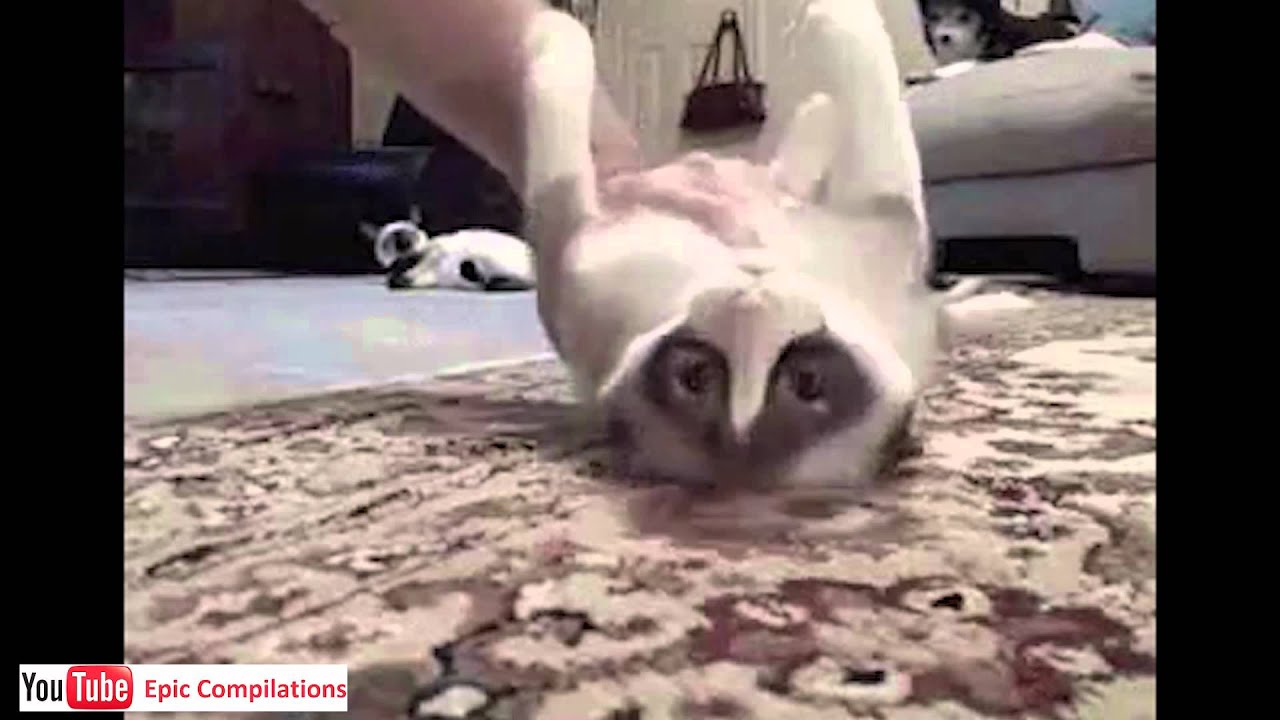 epic funny cats cute cats compilation   60 minutes hd