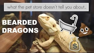 What the pet store doesn't tell you: Bearded Dragons