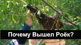 пчеловодство для начинающих - Почему вышел роёк ? Пасека