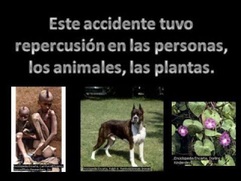 DESTRUCCION DE LOS ECOSISTEMAS.mpg