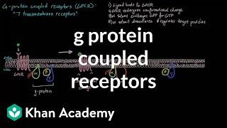 G Protein Coupled Receptors | Nervous system physiology | NCLEX-RN | Khan Academy