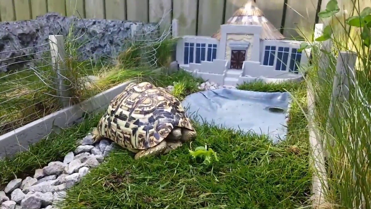 [This Tortoise Lives In A Miniaturized Version Of Jurassic Park] Video
