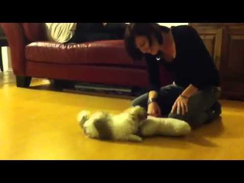 Perros - Perro mopa