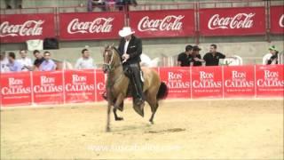 CAMPEONATO YEGUAS TROTE Y GALOPE PEREIRA GRADO A 2016