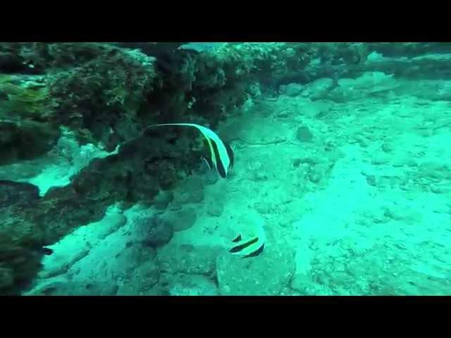 柏島のダイビング画像