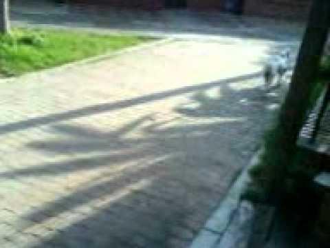 el perro que hace mandados.3GP