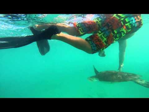 Barbados, Sea Turtles