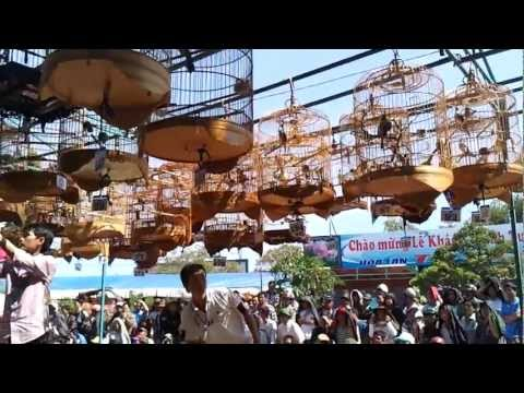 Thi Tieng Chim Chao Mao Hot Gia Lai 08.12.2012.mp4 video