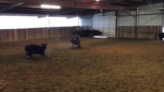 Hatrick- Jared Lesh cowhorses