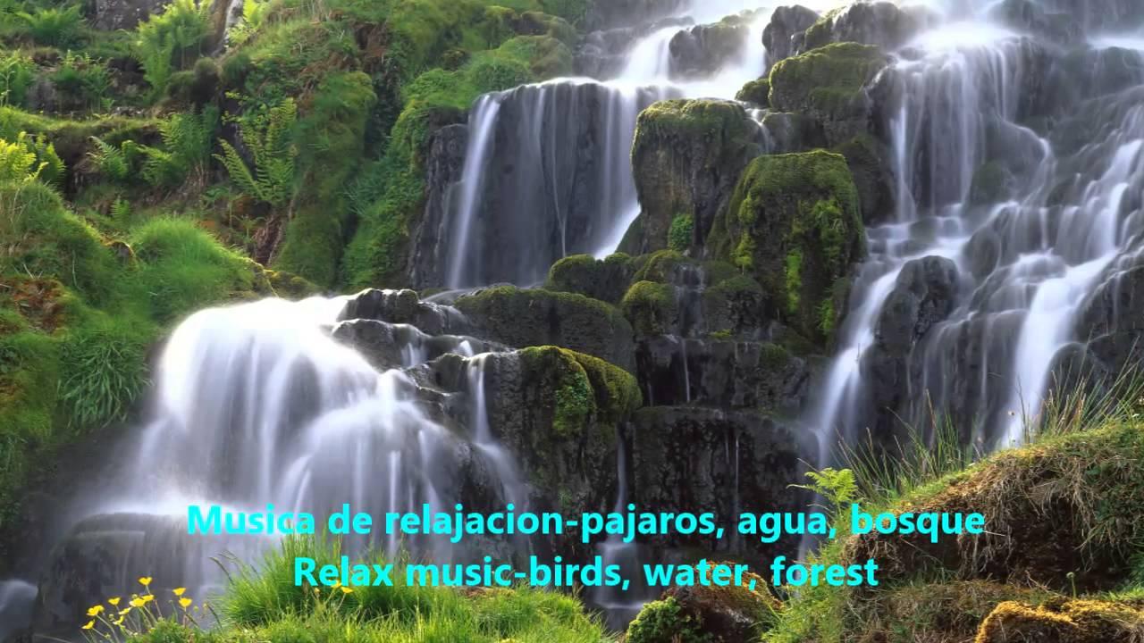 musica de relajacion pajaros, agua, bosque relax music