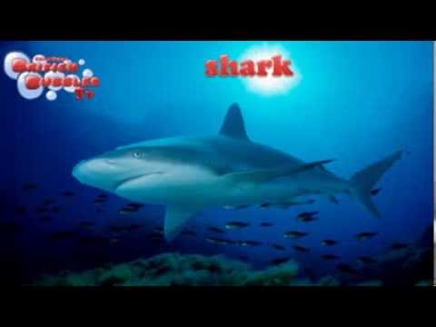 Animales marinos en ingles youtube for Modelos de estanques para peces