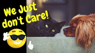 When dogs and cats just don't care compilation~Funny dogs and Cats video~Animals being animals serie