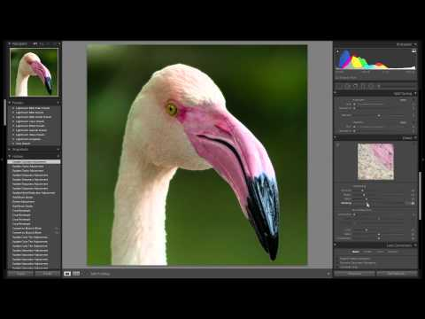 Lightroom 6 cc: Wildlife Editing & Post Processing from Start to Finish  - Watch me edit #002