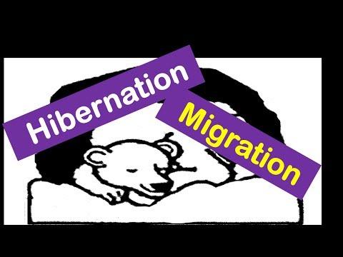 Hibernation & Migration of Animals -Lesson for Kids