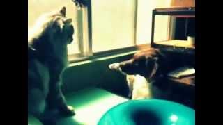 Watch Hysteric Blue Pokapoka video