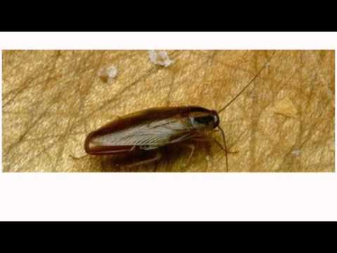 Cockroach Removed From Man's Ear   January 12, 2014 MUST SEE