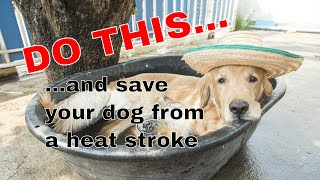 The dog days of Summer will affect your dog!