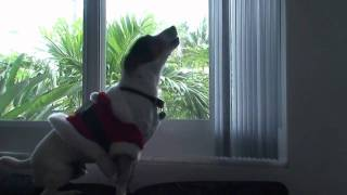 Milo Presents a Christmas Chant (Barking Dog)