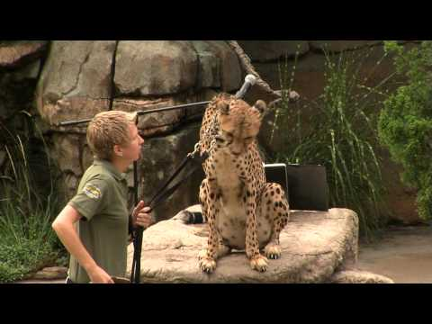 Cincinnati Opera at the Zoo Video