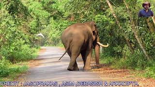 download lagu Elephant The King Of Duars Forest. gratis