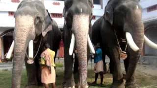 E 4 Elephant: Kiran Narayanankutty, Mangalamkunnu Karnan, Pampady Rajan - Kareparambil Ulsavam 2010
