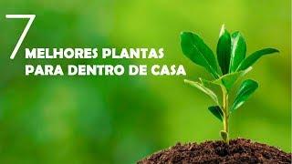 7 PLANTAS PARA DENTRO DE CASA