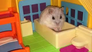 Happy Hamsters and their Hamillion-dollar Hamansion! :p