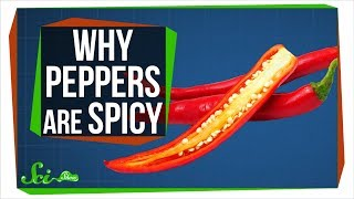 The Real Reason Peppers are Spicy