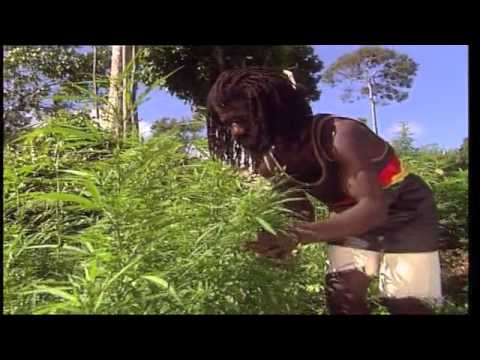 Jamaica Ganja Part 2 video
