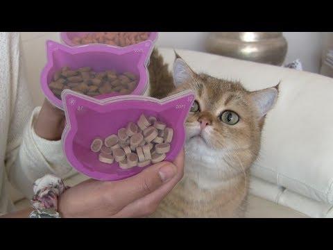 Meet: mijn katjes Coco & Clarence