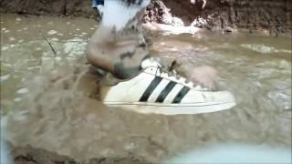 adidas superstar adventure in the woods - wet, mud, trash...