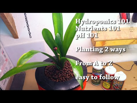 5 Gallons Bucket Hydroponic   Nutrients 101 From A To Z Very Easy