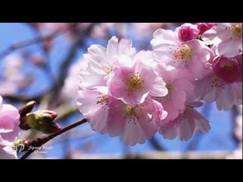 Yiruma - Spring Waltz