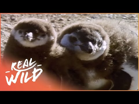 Patagonia: A Land Unknown [Full Documentary] | Wild Things