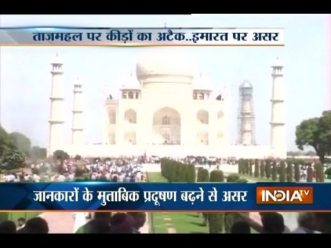 Colour of Taj Mahal fading due to air and water pollution