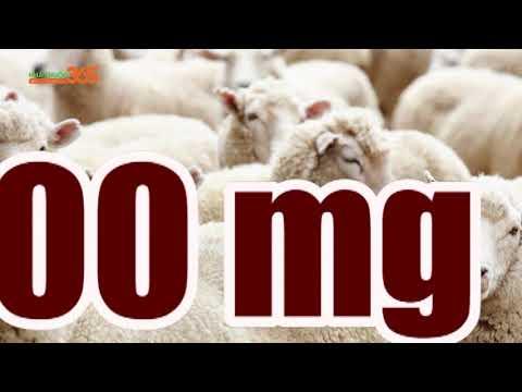 Baby Sheep Essence – Viên uống trị nám cao cấp từ Úc