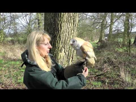 Molly (Barn Owl) Flying Free 26th Feb 2011
